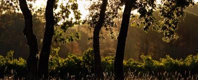 Plaine des Maures à l'aube