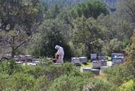 Exploitation apicole (Photographie © Catherine Fournil)